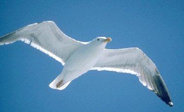 Sur les oiseaux Albatros